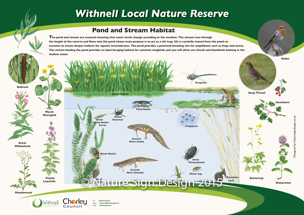 Graphic design work completed by nature sign design for Design of oxidation pond numerical
