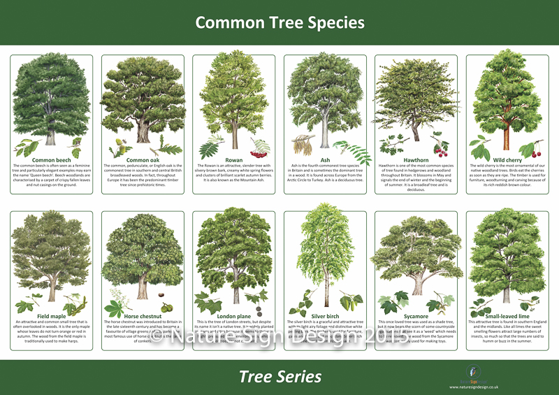 List Of Trees By Common And Other Names Download Lengkap