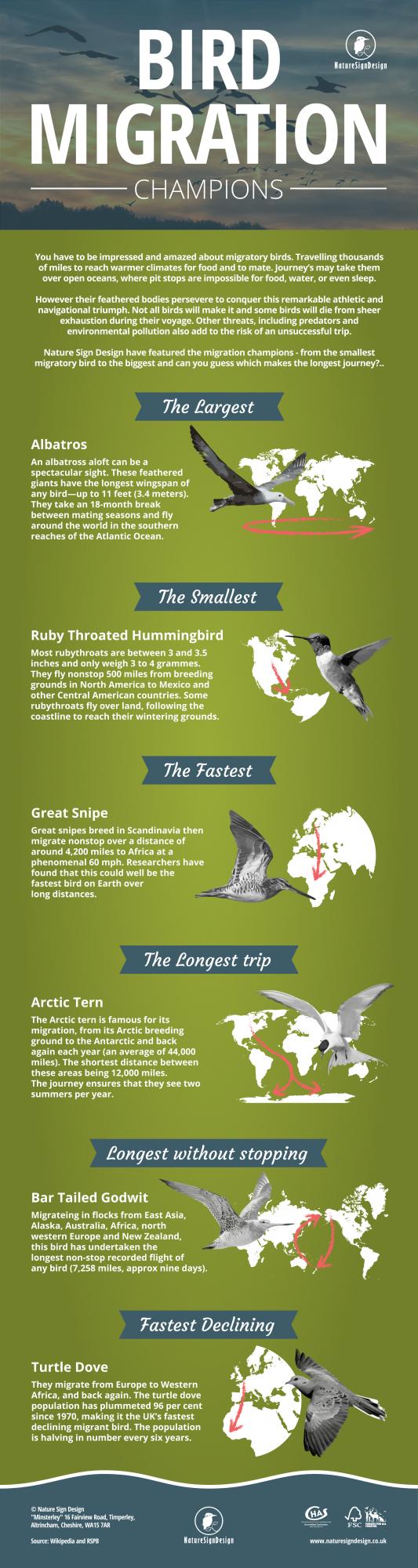 bird migration infographic